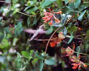 Utah stock images -- Nature & Scenery